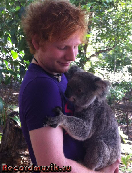Ed Sheeran - Эд Ширан, с коалой