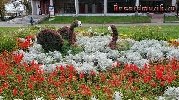 Мой отдых во Владимирской области - Владимир, цветочные лебеди